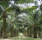 North East Has Potential to emerge as the largest Oil Palm Cultivator in the Country 2