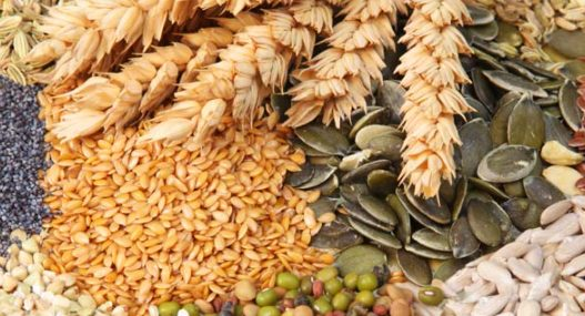 Cereals exports grew by close to 53% to Rs 49,832 crore in Apr – Dec 2020-21 1