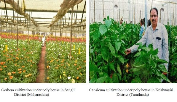 National Horticulture Board clears record 1278 pending subsidy applications 1