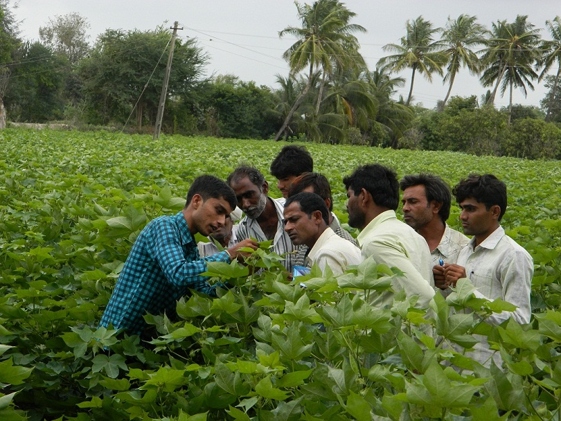 Adaptation of scientific agriculture practices will drive global demand towards Indian cotton farmer 1