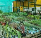 Vrikshavan Nursery offers a 20% discount on plants, planters and ceramic decor at the store 6